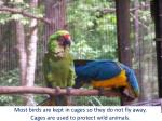 most birds are kept in cages so they do not fly away cages are used to protect wild animals