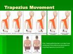 trapezius movement