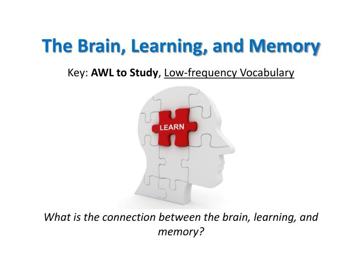the brain learning and memory n.