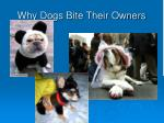 why dogs bite their owners