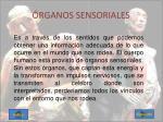 rganos sensoriales