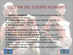 sistema del cuerpo humano