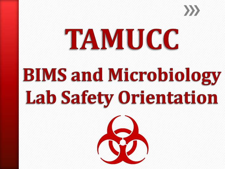 tamucc bims and microbiology lab safety orientation n.