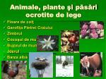 animale plante i p s ri ocrotite de lege