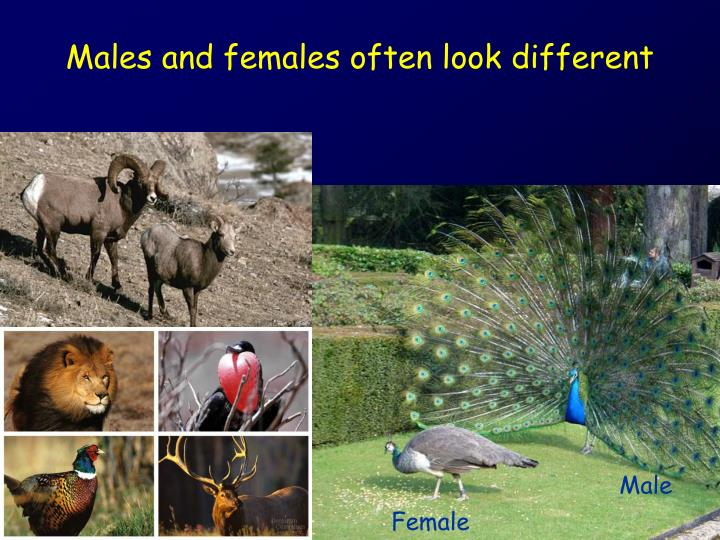 males and females often look different n.