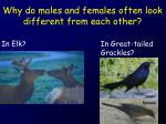 why do males and females often look different from each other