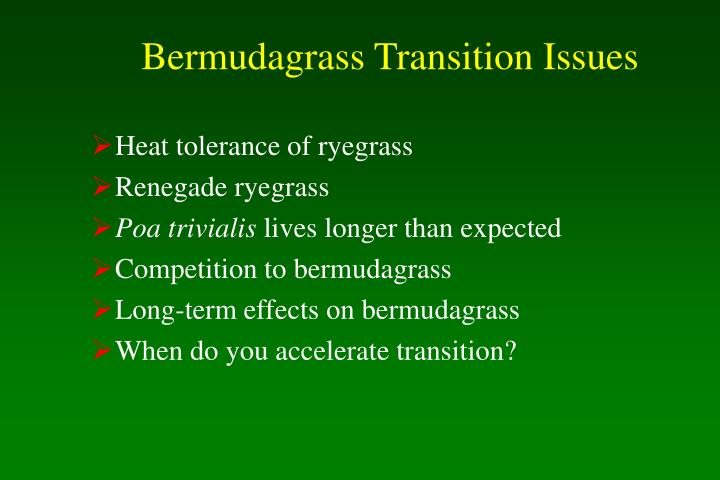Bermudagrass Transition Issues