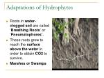 adaptations of hydrophytes1