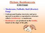phylum basidiomycota club fungi