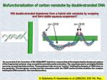 biofunctionalization of carbon nanotube by double stranded dna