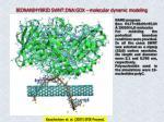 bionanihybrid swnt dna gox molecular dynamic modeling