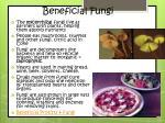 beneficial fungi