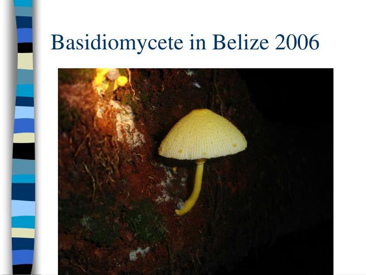 Basidiomycete in Belize 2006