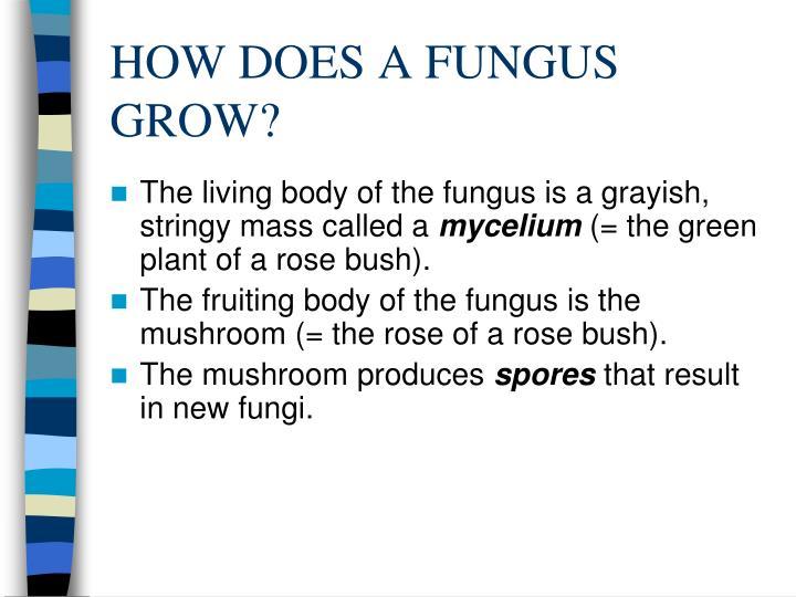 How does a fungus grow