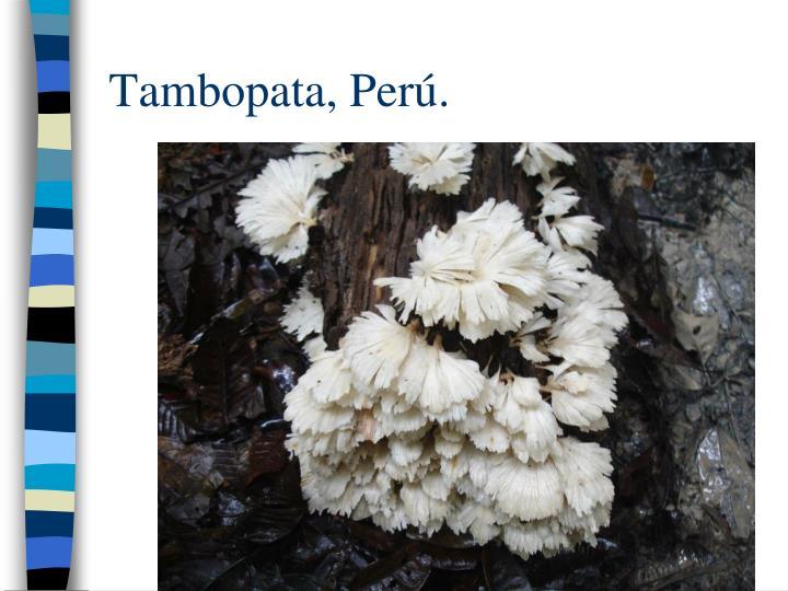 Tambopata, Per