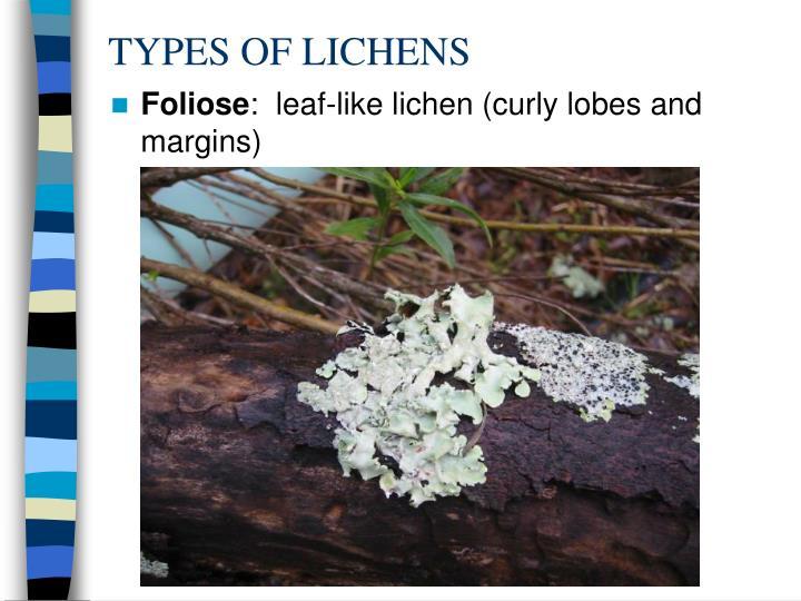 TYPES OF LICHENS