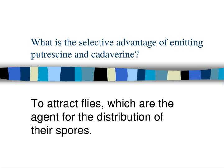 What is the selective advantage of emitting putrescine and cadaverine?