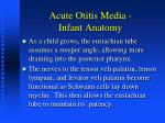 acute otitis media infant anatomy