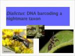 dialictus dna barcoding a nightmare taxon