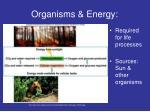 organisms energy