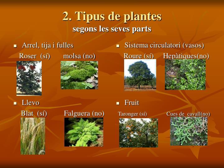 2. Tipus de plantes