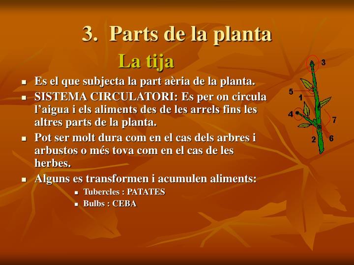 3.  Parts de la planta