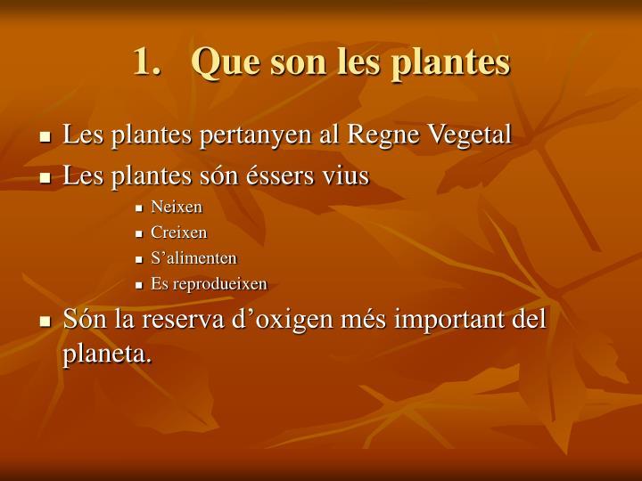 Que son les plantes