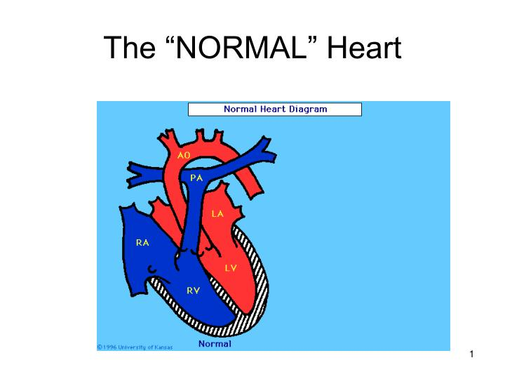 the normal heart n.