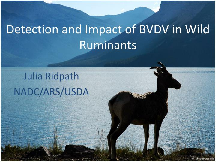 detection and impact of bvdv in wild ruminants n.