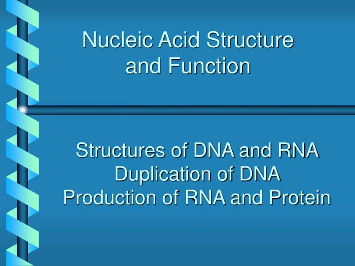 nucleic acid structure and function n.