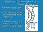 transcription production of rna using dna as a template