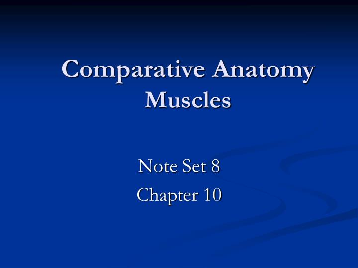 comparative anatomy muscles n.