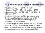 3 3 3 aerobic and anerobic metabolism
