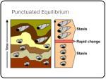 punctuated equilibrium1
