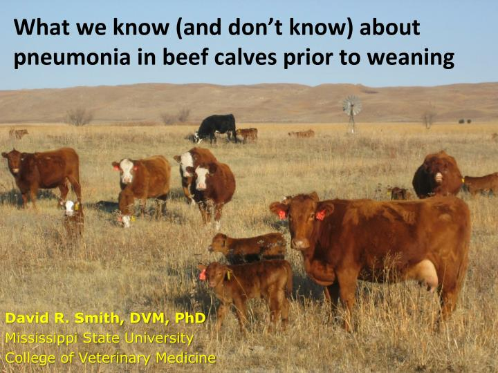 what we know and don t know about pneumonia in beef calves prior to weaning n.