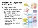 phases of digestion gastric phase