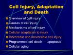 cell injury adaptation and death