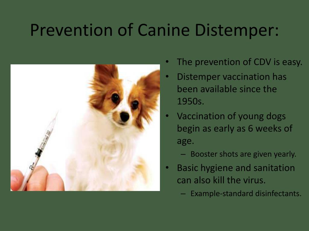 what does distemperment shot do for dogs