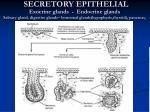 secretory epithelial