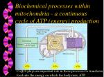 biochemical processes within mitochondria a continuous cycle of atp energy production