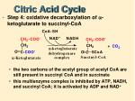 citric acid cycle5