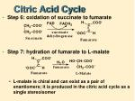 citric acid cycle7
