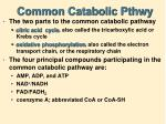 common catabolic pthwy