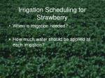 irrigation scheduling for strawberry