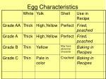 egg characteristics