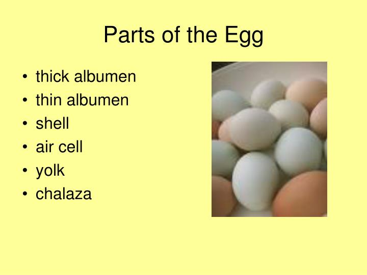 parts of the egg n.