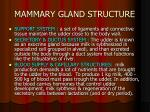 mammary gland structure