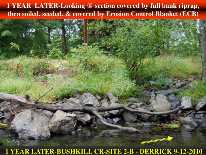 1 YEAR  LATER-Looking @ section covered by full bank riprap, then soiled, seeded, & covered by Erosion Control Blanket (ECB)