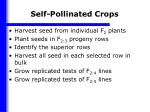 self pollinated crops1