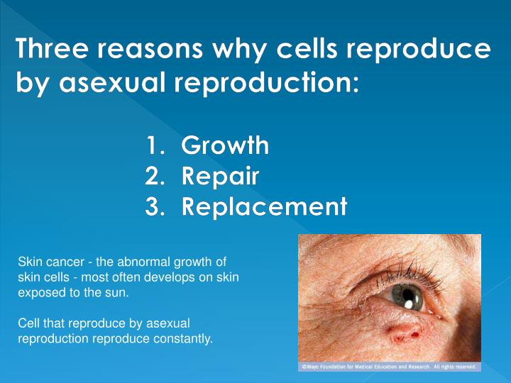 Three reasons why cells reproduce by asexual reproduction: